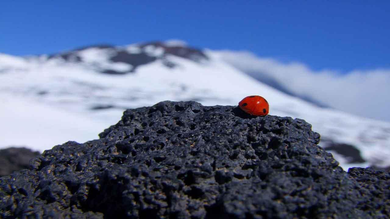 igneous-rocks