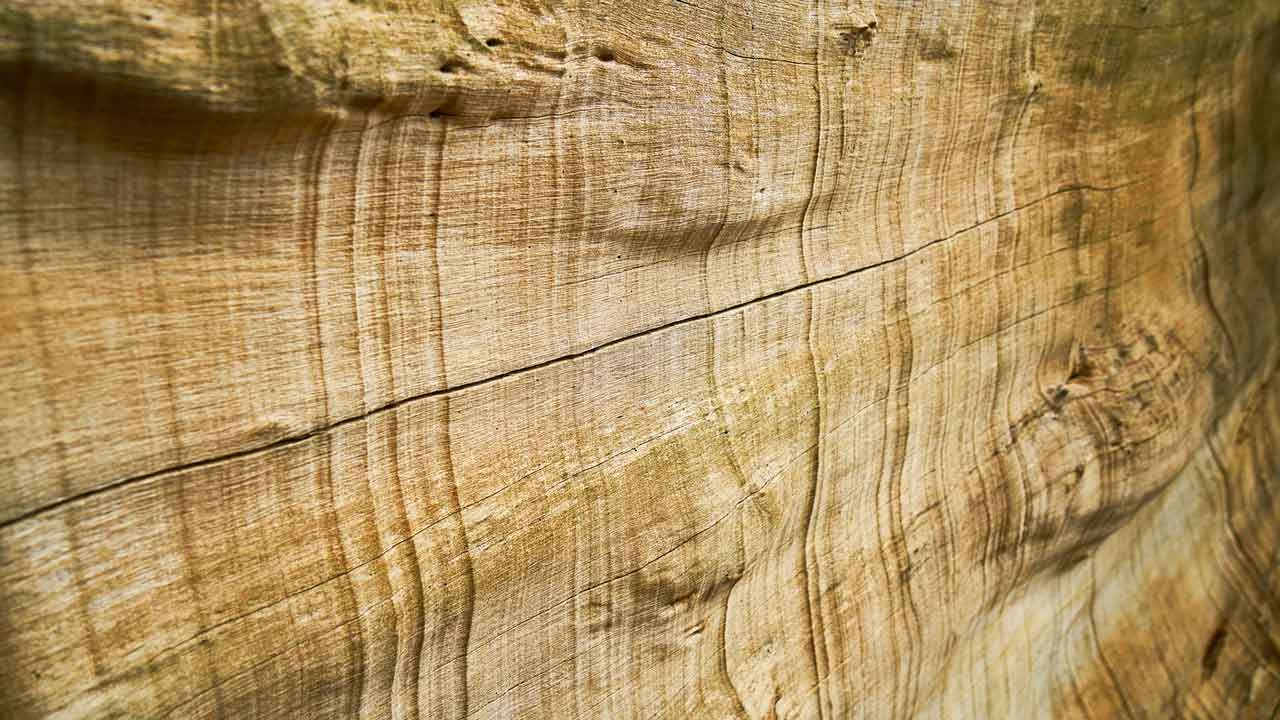methods-of-timber-preservation