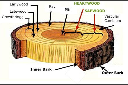 properties of timber
