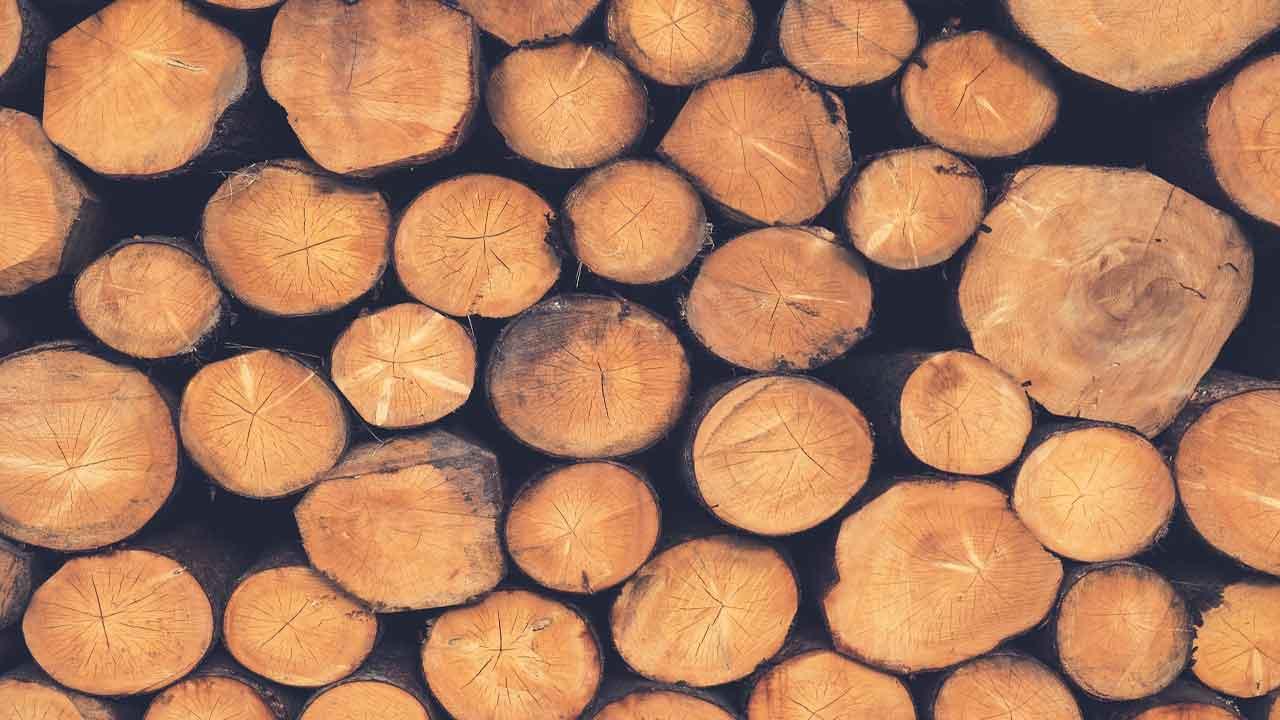 seasoning-of-timber