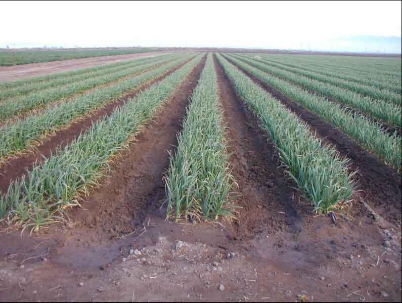 sub-surface-irrigation