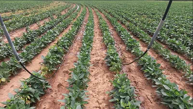 trickle-irrigation